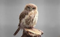 Owl [6] wallpaper 1920x1200 jpg