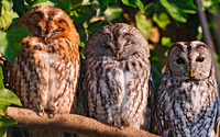 Owls wallpaper 2880x1800 jpg