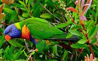 Parrot wallpaper 1920x1200 jpg