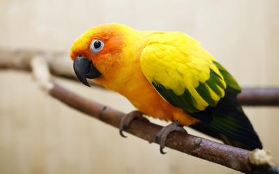 Parrot [2] wallpaper