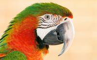 Parrot [5] wallpaper 1920x1200 jpg