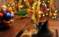 Parrot looking down on the dog wallpaper 1920x1200 jpg