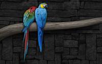 Parrots wallpaper 1920x1200 jpg