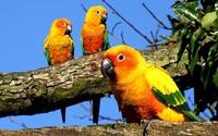 Parrots [2] wallpaper 1920x1200 jpg