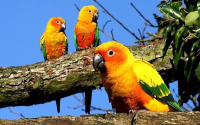 Parrots [2] wallpaper