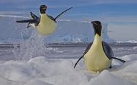 Penguins [5] wallpaper 1920x1200 jpg