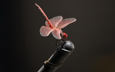 Pink dragonfly close-up wallpaper