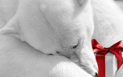 Polar bear holding a present wallpaper