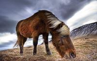 Pony wallpaper 1920x1080 jpg