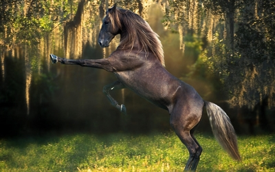Prancing brown horse in the forest wallpaper