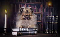 Puppy on books wallpaper 1920x1200 jpg