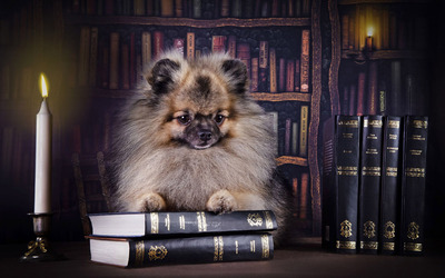 Puppy on books wallpaper