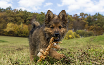Puppy plying with a giraffe toy wallpaper