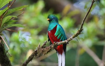 Quetzal wallpaper