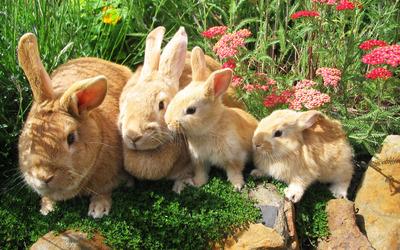 Rabbit family wallpaper