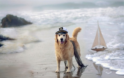 Sailor Golden Retriever wallpaper