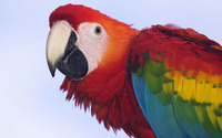 Scarlet macaw [4] wallpaper 1920x1200 jpg
