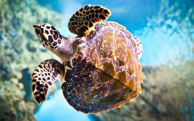 Sea Turtle [2] wallpaper