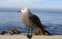 Seagull [4] wallpaper 3840x2160 jpg