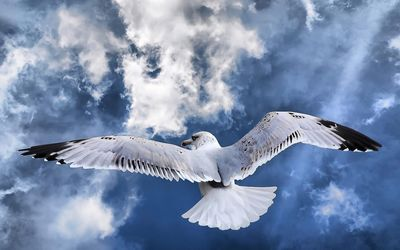 Seagull in the sky Wallpaper