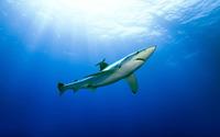 Shark [6] wallpaper 1920x1200 jpg