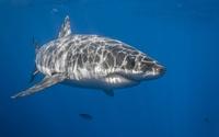 Shark [2] wallpaper 2560x1600 jpg