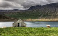 Sheep and lambs on the lake side wallpaper 2560x1600 jpg