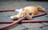 Sleeping cat wallpaper 2560x1600 jpg