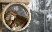 Sleepy cat wallpaper 1920x1200 jpg