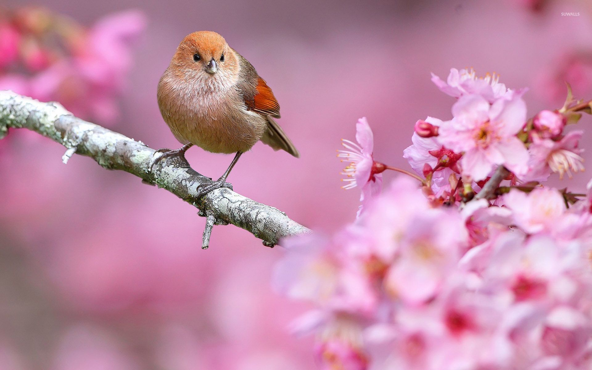 Small Bird In A Spring Tree Wallpaper Animal Wallpapers