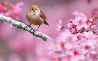 Small bird in a spring tree wallpaper 1920x1200 jpg