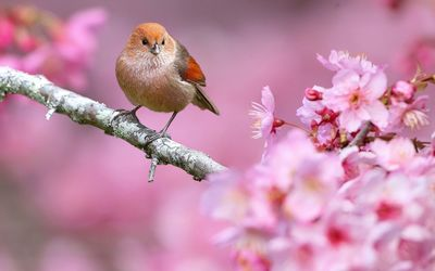 Small bird in a spring tree wallpaper