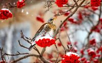 Small bird in the snow wallpaper 1920x1200 jpg
