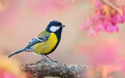 Small bird on a branch wallpaper