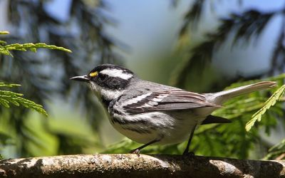 Small bird on the branch wallpaper