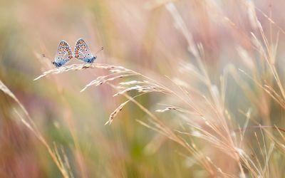 Small butterflies wallpaper