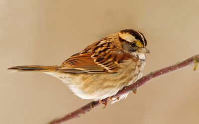 Small sparrow on the branch wallpaper