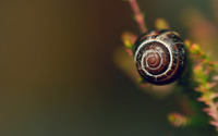 Snail [7] wallpaper 1920x1200 jpg