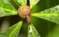 Snail wallpaper 1920x1200 jpg