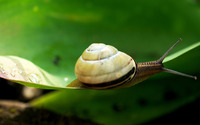 Snail [9] wallpaper 1920x1080 jpg