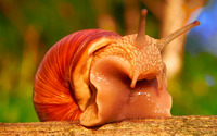 Snail [8] wallpaper 2560x1600 jpg