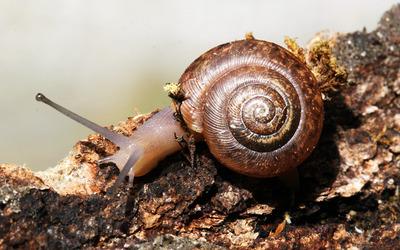 Snail [11] wallpaper