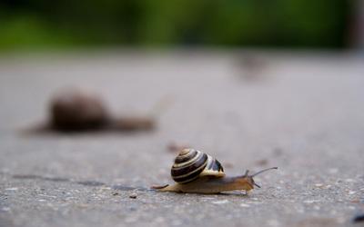 Snail [5] wallpaper