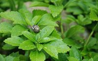 Snail on a wet plant wallpaper 2880x1800 jpg