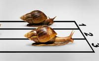 Snail race [2] wallpaper 2560x1600 jpg