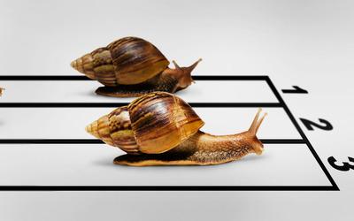 Snail race [2] wallpaper