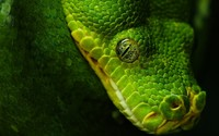 Snake [6] wallpaper 1920x1200 jpg