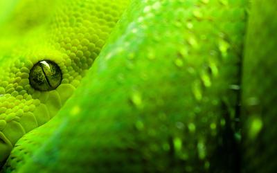 Snake [7] wallpaper