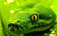 Snake [4] wallpaper 1920x1200 jpg