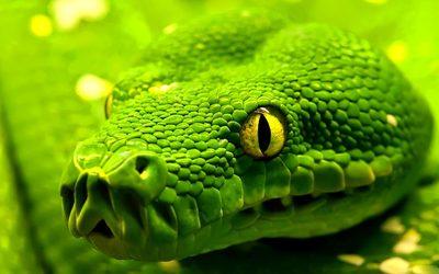 Snake [4] wallpaper